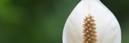 5 φυτά που καθαρίζουν τον αέρα του σπιτιού σας!